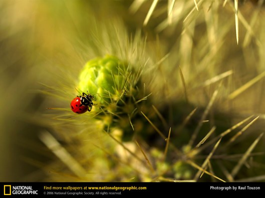 Ladybird photograph by Raul Touzon