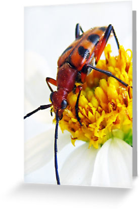 Buy beetle art from Heavenandus777 @ RedBubble