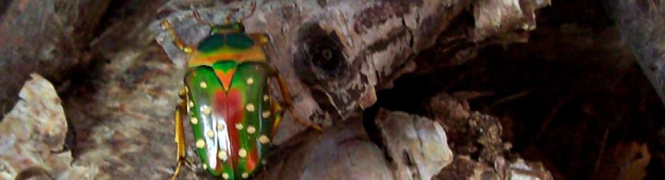 i love flower beetles's blog